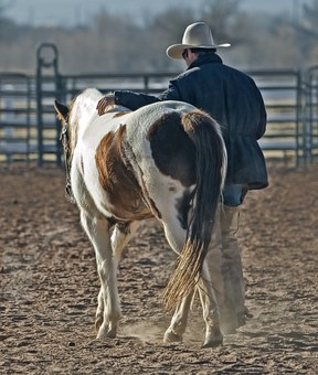 Equine Therapy Registry